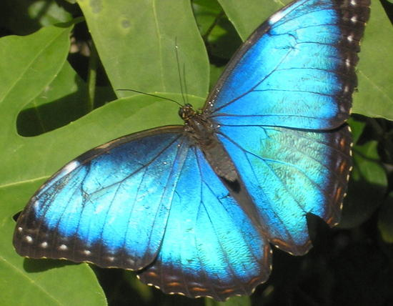 http://nadiahohn.blogspot.com/2011/12/blue-butterfly-best-of-2011.html